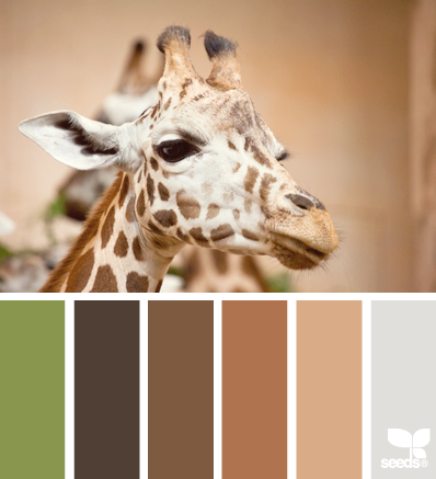 GiraffeTones_1